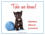 Kitten Adoption Flyer